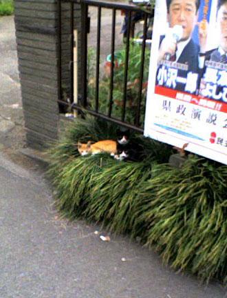 子猫ちゃぁ~ん♡